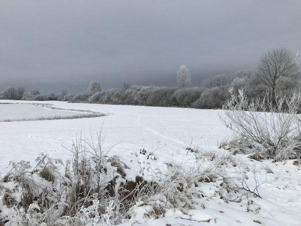 Winter im Moos